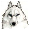 Аватар для Shtulz